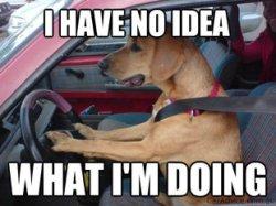 dog-driving-fun