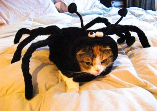 spider-cat-05-2